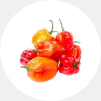 Fresh Habanero Pepper