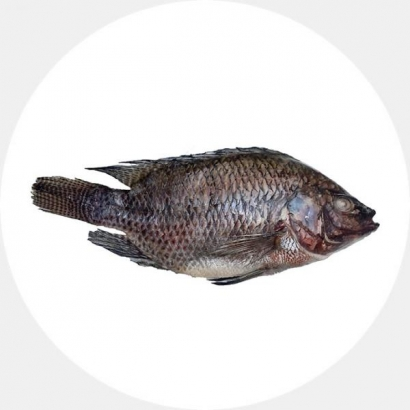 Tilaapia kala