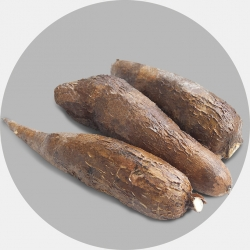 Cassava (1 carton / Net weight ca 18 Kg)